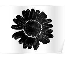 Black flower Poster