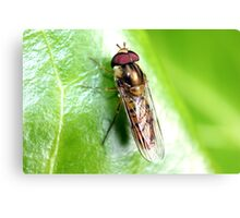 Hedgerow Insect Canvas Print