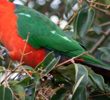 Australian King Parrot Sticker