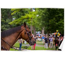 Saratoga - Brown horse Poster