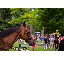 Saratoga - Brown horse Photographic Print