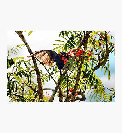 Tasty berries - image 2 of series 2 Photographic Print