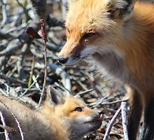 Fox and Pup by Gilda Axelrod