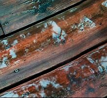 Leaf Reflections on the Deck by Rosemary Sobiera