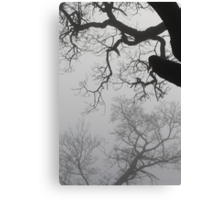 Old trees in fog. Right outside of Oslo, Norway Canvas Print