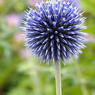 Globe Thistle by Linda  Makiej Photography