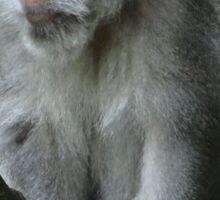 Balinese monkey in tree Sticker