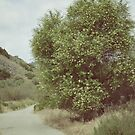 The Wishing Tree by RichCaspian