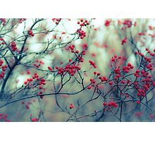 Winter Berries Photographic Print