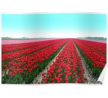 Tulipfield in Red Poster
