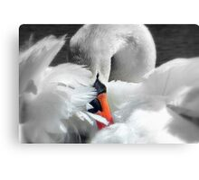 Soft As A Feather!  Canvas Print