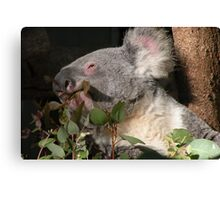 Ahh ... Bliss ... a mouthful of fresh tender leaves ! Canvas Print