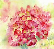 Ruby Tuesday Hydrangea by Ruth S Harris