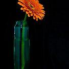 Still Life with Gerbera Daisy by Martie Venter