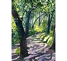 Path into the trees - Descanso Gardens Photographic Print
