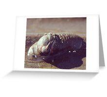 Sea slug kinda life Greeting Card