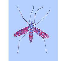 Primitive Crane Fly Photographic Print
