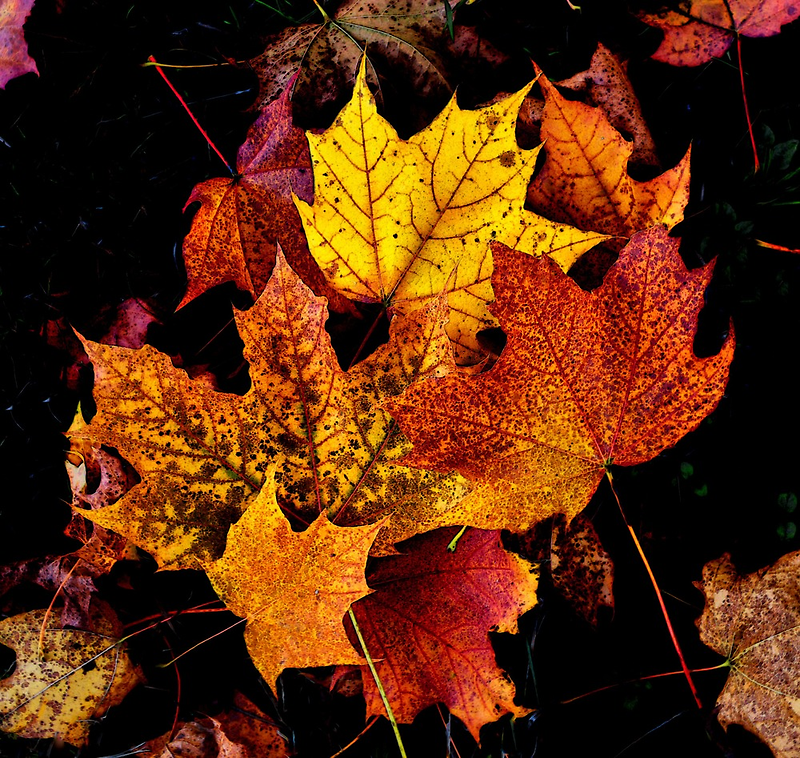 The Colors Of Fall by Charles & Patricia   Harkins ~ Picture Oregon