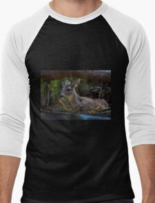 Baby Deer At Amaru Men's Baseball ¾ T-Shirt