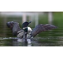 Common loon at 6am Photographic Print