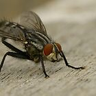 Fly by Simon Pattinson