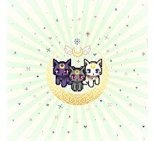 Sailor Cats - Green Photographic Print