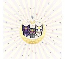Sailor Cats - Purple Photographic Print