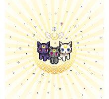 Sailor Cats - Yellow Photographic Print