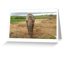 Elephants habitat Greeting Card