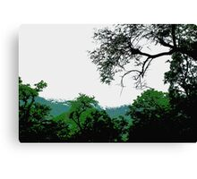 Nature evergreen Canvas Print