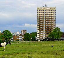 Gypsy Pony On Common Land by SparklesDarkly
