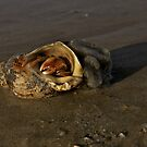 Hermit Crab on Fahan Beach by George Row