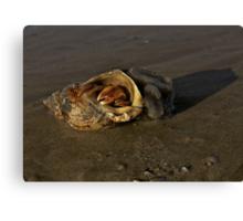 Hermit Crab on Fahan Beach Canvas Print