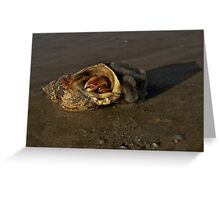 Hermit Crab on Fahan Beach Greeting Card