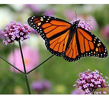 Majestic Monarch Photographic Print