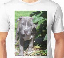 Gorgeous Baby Pit Bull Puppy Dog Unisex T-Shirt