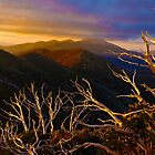 Mt Hotham Brush by DavidsArt
