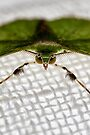 Moth At Rest by Fred McKie