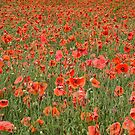 Poppy Field by Lisa Kent