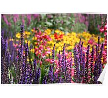 English country garden flower bed Poster