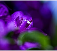 Purple Flower by Wolf Sverak
