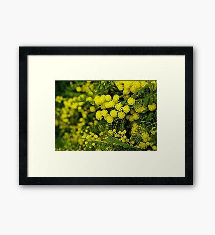 Wattle Fall Framed Print