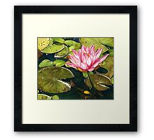 Water Lily at the Biltmore Gardens Framed Print