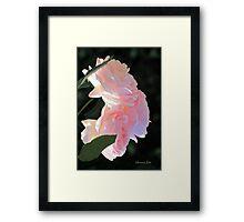 Backlit Roses ~ Sweetly Romantic Framed Print