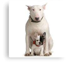 English Bull Terrier & Frenchie Friend Metal Print