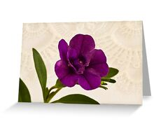 Mini Petunia  Greeting Card