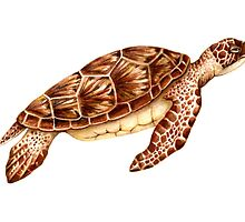 Green Sea Turtle by Suzannah Alexander