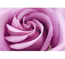 Pink Rose Folded To Perfection Photographic Print