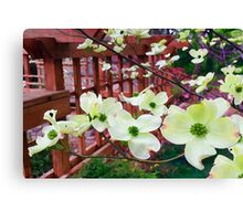 Dogwood in Bloom - For My Sister Canvas Print