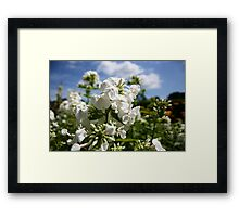 White flower and blue sky landscape Framed Print